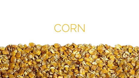 Corn - фото 4572