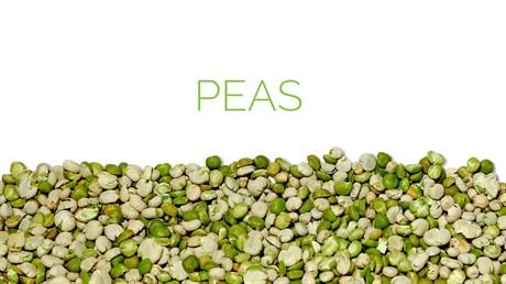 Peas - фото 4573
